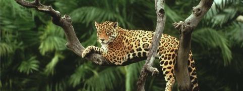 Leopard at Terra Natura