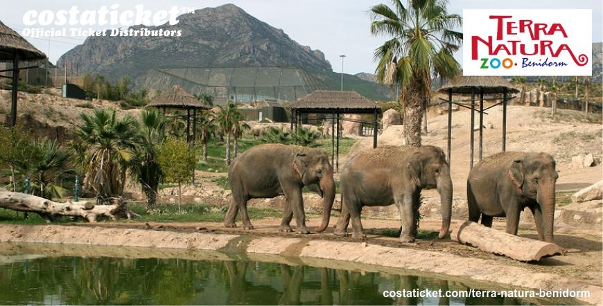 Terra Natura Elephants