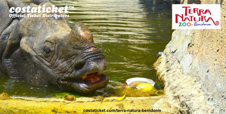 Terra Natura Rhino